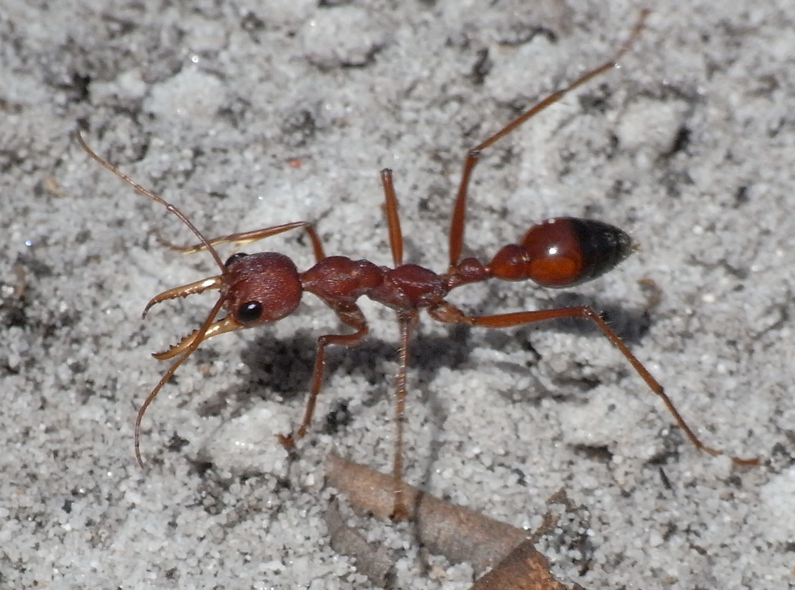 Summary Of Ants Nature S Secret Power