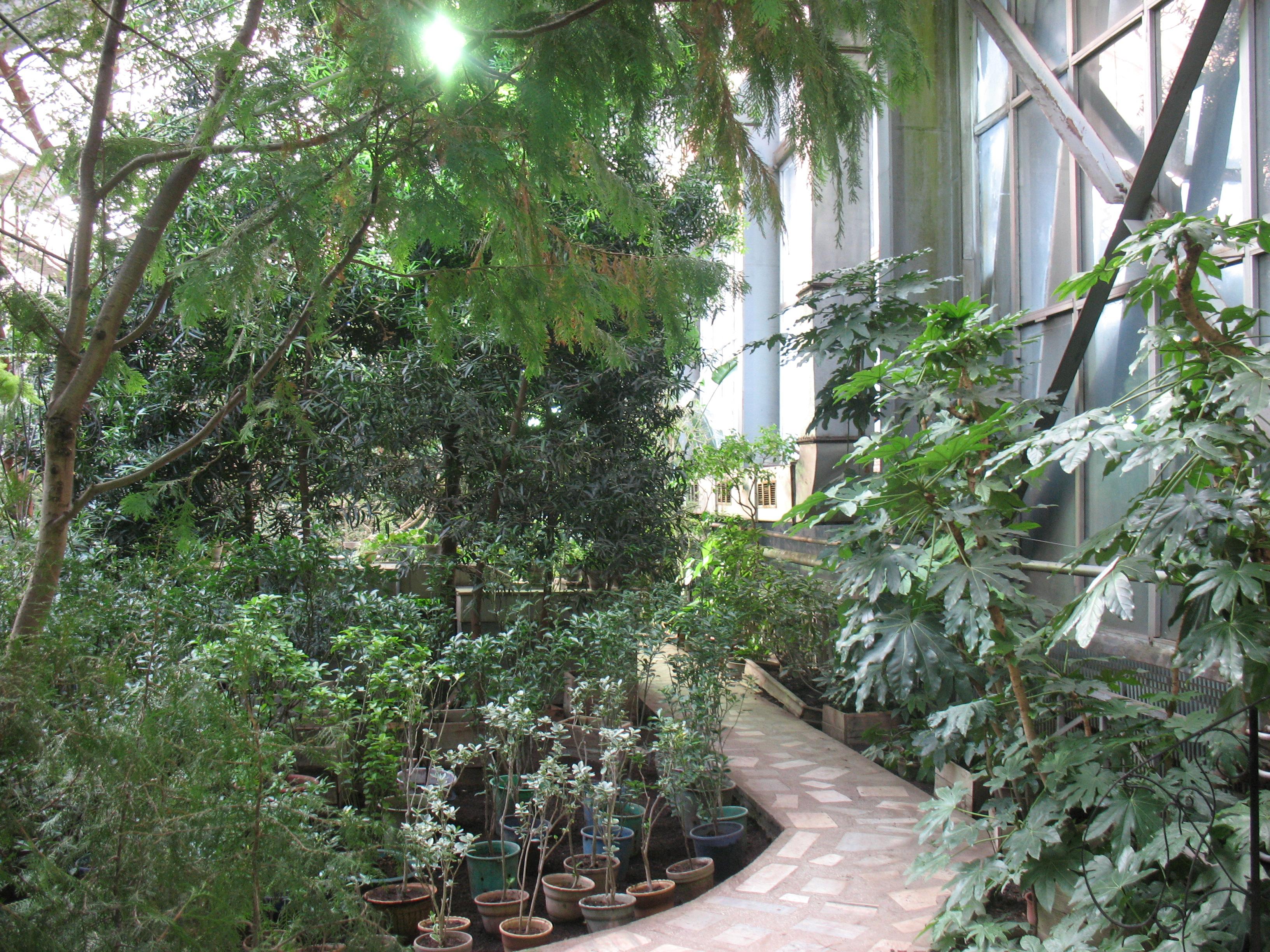 File Siberian Botanical Garden Greenhouse Jpg Wikimedia