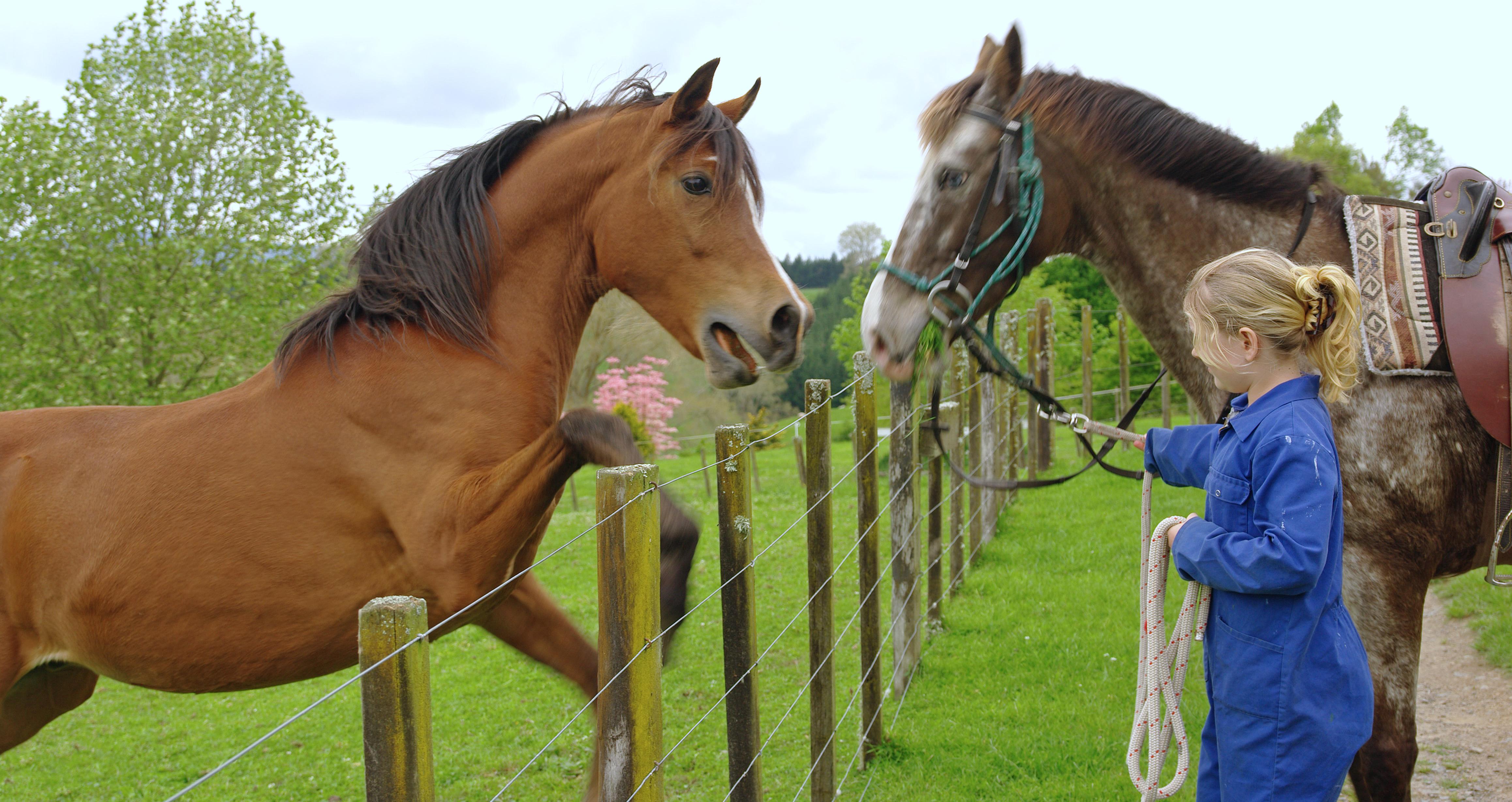 File:Stallion meets Appalossa Mare.jpg - Wikimedia Commons