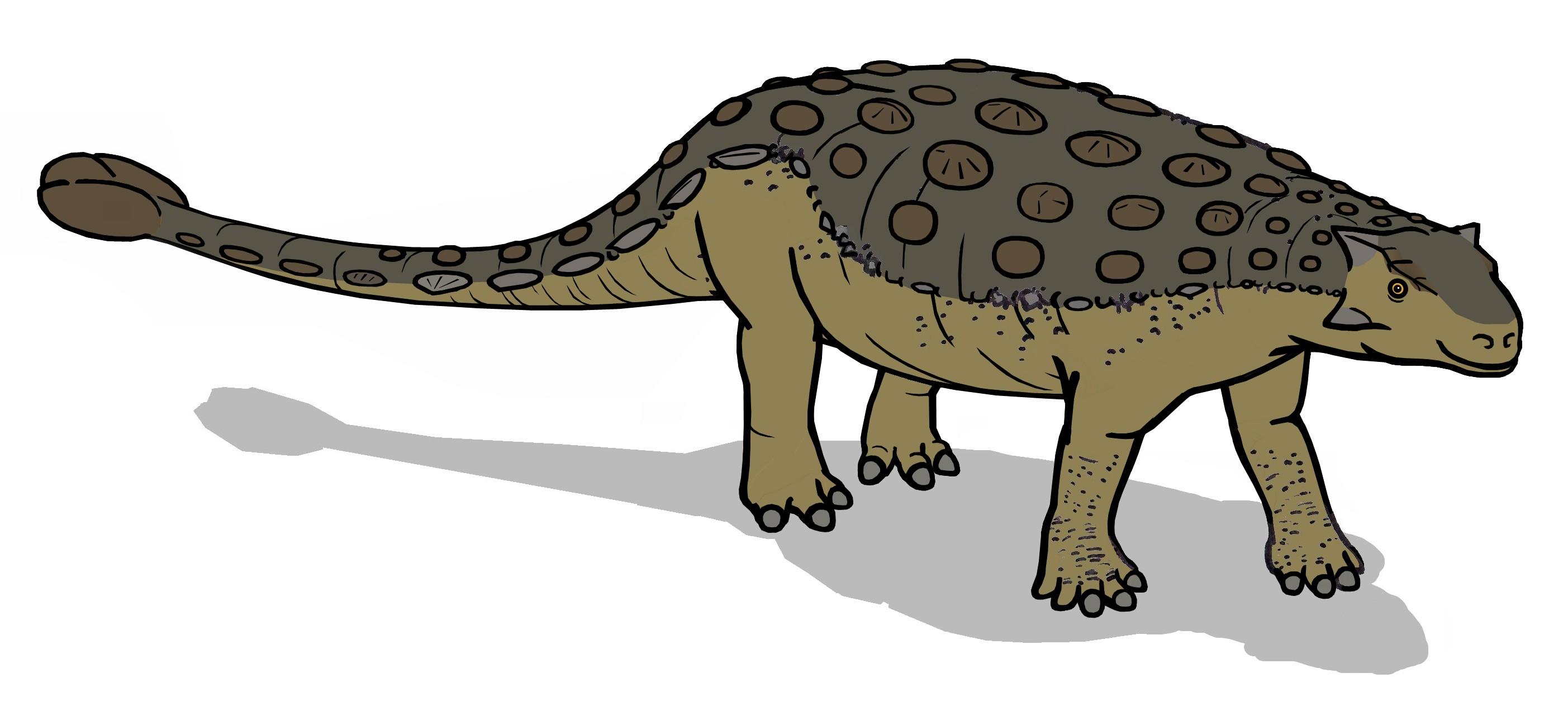 File:Tarchia 6497.JPG - Wikipedia, the free encyclopedia