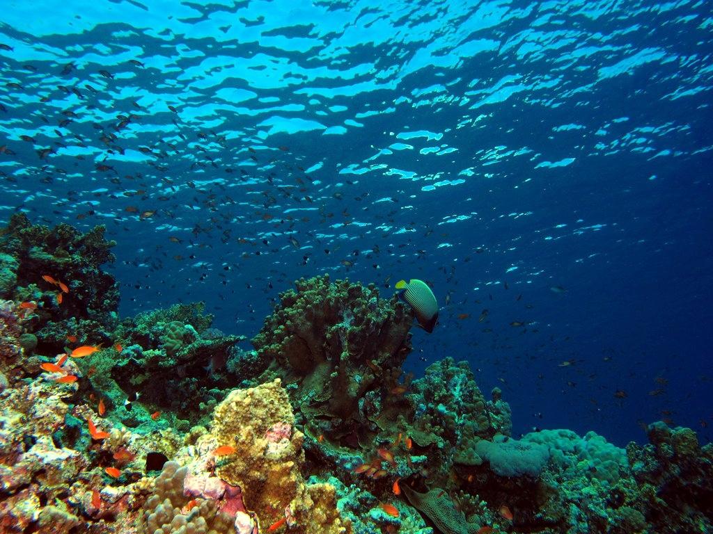 Underwater Acrylic Painting Siloete