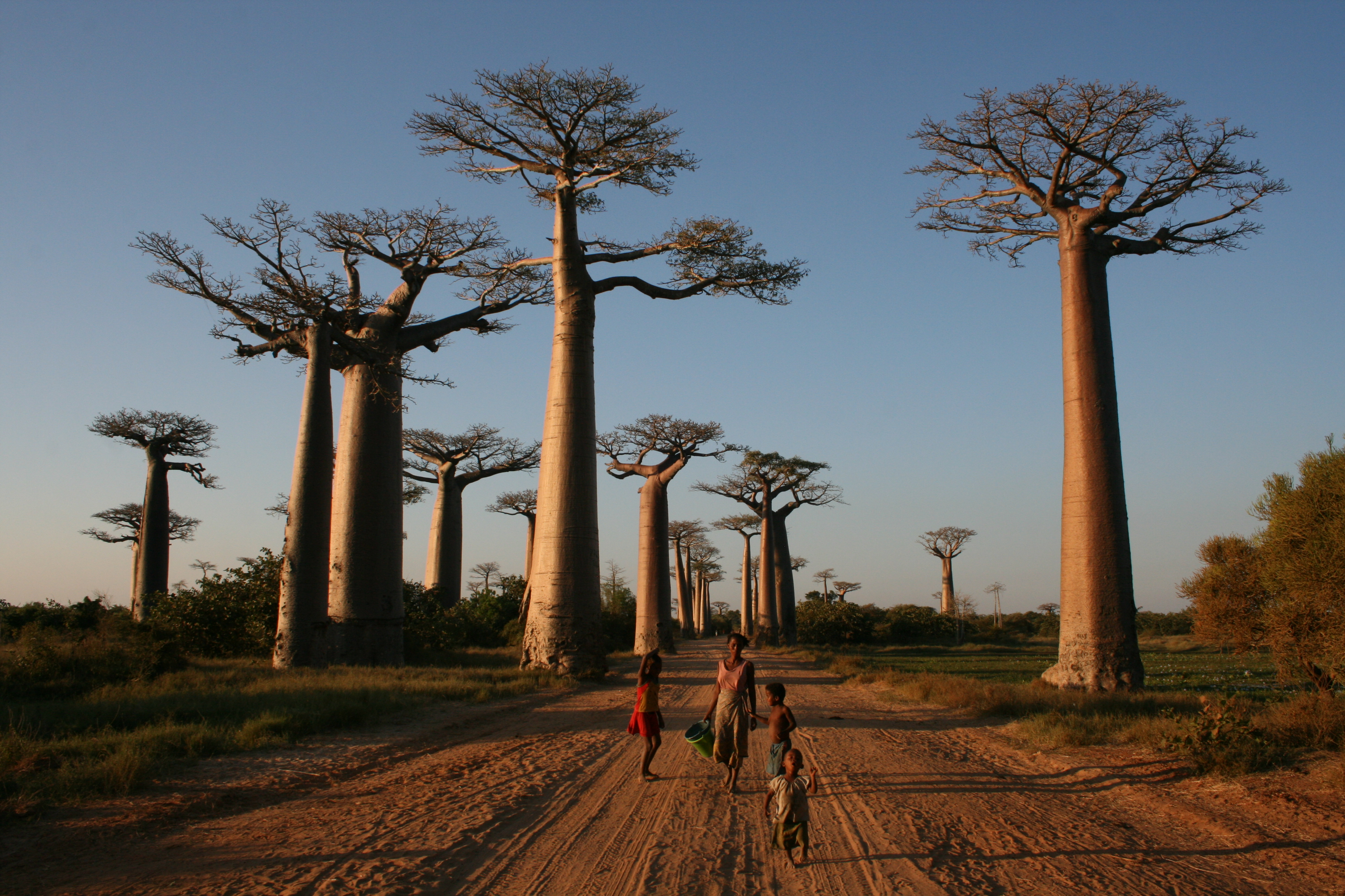 Avenue of the baobabs for Unique landmarks