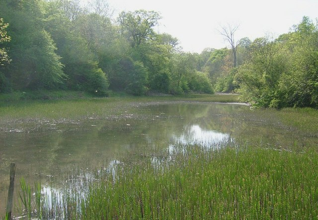 Wychwood Forest (marshy waters) - geograph.org.uk - 1440042