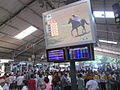'RACECOURSE BETTING RING' where lakhs or crores of rupees are won and lost on a race..JPG
