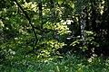 "Алена Андрусива Парк ""Дружба"" 44-231-5002 49.043822, 39.121175.jpg"