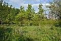 Ботанічний сад м.Вінниця.jpg