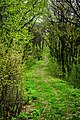 Бутова гора, Шишацький район - 2016-04-17 033-1.jpg