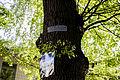 Віковий дуб-красень 03.jpg
