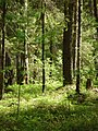 В лесу - panoramio (4).jpg