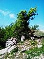 Красота от Родопите,Боровец.jpg