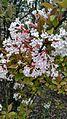 Криворізький ботанічний сад 13.jpg