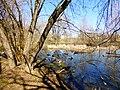 Левобережная старица реки Яузы ниже Енисейской ул. 02.jpg