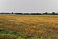 Лес у речки Алимбет - panoramio.jpg