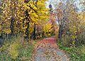 Листья осенние - panoramio.jpg