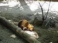 Миколаївський зоопарк, червень 04.jpg