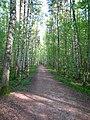 Новоорловский заказник дорога в лесу.JPG