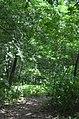 Парк Берёзовая роща в Киеве. Фото 35.jpg