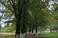 Парк у Вороновиці DSC 1747.JPG