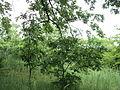 Парк шума Гази Баба во мај (112).JPG