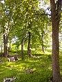 Прилуцький дендропарк Прилуцький район, м. Прилуки, вул. Вавилова, 16 74-107-500 05.jpg