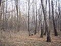 Украина, Киев - Голосеевский лес 253.JPG