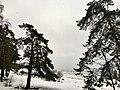 Финский залив Серово 170129.jpg