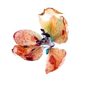 Цветок яблони Флуоресценция негатив.jpg