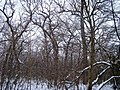 Чернечий Ліс 28.jpg
