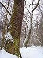 Чернечий Ліс 9.jpg