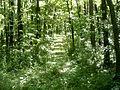 Чорний ліс (панорама).jpg