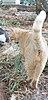 חתול זכר מסורס.jpg
