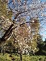 الغابة ولاية سعيدة الربيع.jpg