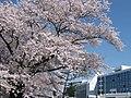 奥羽大学病院 - panoramio.jpg