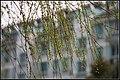 欣达绿化区 - panoramio.jpg