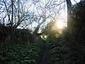 -2019-12-30 Footpath near Bromholm Priory, Bacton, Norfolk.JPG