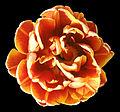 - Flower 17 -.jpg