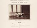 01. Bull and Terrier, Paris 1863.png