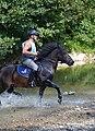 02018 0585 Reiten auf den Huzulen Pferden in Rudawka am Wisłok.jpg