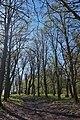 05-210-5022 Чернятинський парк.jpg