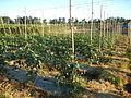0574jfLandscapes Mabalas Diliman Salapungan Paddy fields San Rafael Bulacan Roadsfvf 01.JPG