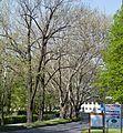 07 2012 Bystrice-pod-Hostynem pamatny-strom Platanova-alej-u-zamku.jpg