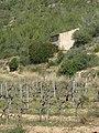 128 Vinyes vora la caseta de les Rocasses (Vespella de Gaià).jpg