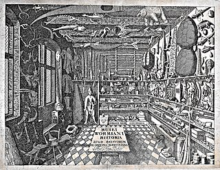 Cabinet of curiosities encyclopedic collections of objects whose categorical boundaries were, in Renaissance Europe, yet to be defined