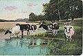 1905-mucche-al-pascolo-02.jpg