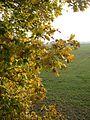 20121023Feldahorn Hockenheim7.jpg