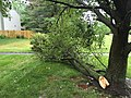 2015-06-18 17 11 37 Large branch broken off of a Bradford Pear during a severe thunderstorm on Tranquility Court in the Franklin Farm section of Oak Hill, Virginia.jpg