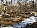 2016-02-08 13 40 41 View south up Difficult Run near a sand bar from the Gerry Connolly Cross County Trail between Vale Road and Lawyers Road in Oakton, Fairfax County, Virginia.jpg