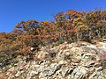 2016-10-25 12 42 33 Rocky outcrop and trees displaying autumn foliage at the Little Devils Stairs Overlook along Shenandoah National Park's Skyline Drive in Rappahannock County, Virginia.jpg