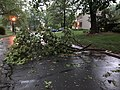 2018-05-14 19 02 43 Broken branches after a severe thunderstorm on Dairy Lou Drive in the Franklin Farm section of Oak Hill, Fairfax County, Virginia.jpg