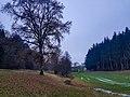 20201211 FND Quellmoor bei Näglstall3 Pleisk.jpg